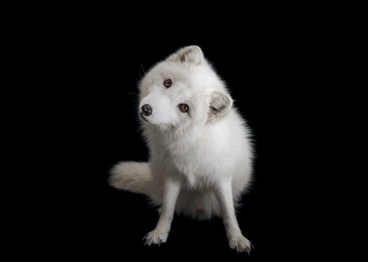 Na ogled 25 ganljivih portretov živali