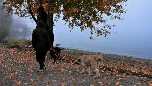 5 motivacijskih nasvetov – za tiste dni, ko se nam ne ljubi na sprehod