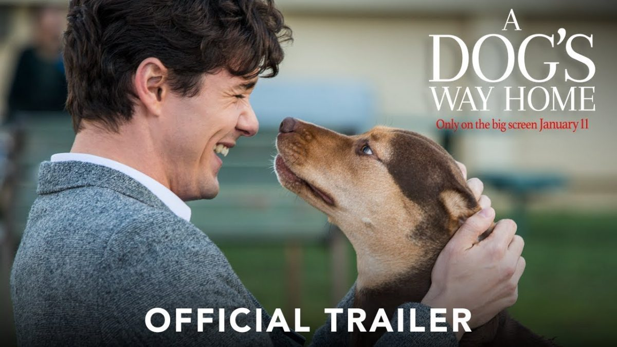 Prihaja nov pasji film – 'A Dogs Way Home'