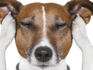 5 nasvetov za boljšo motivacijo psa