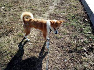 Foxy išče dom