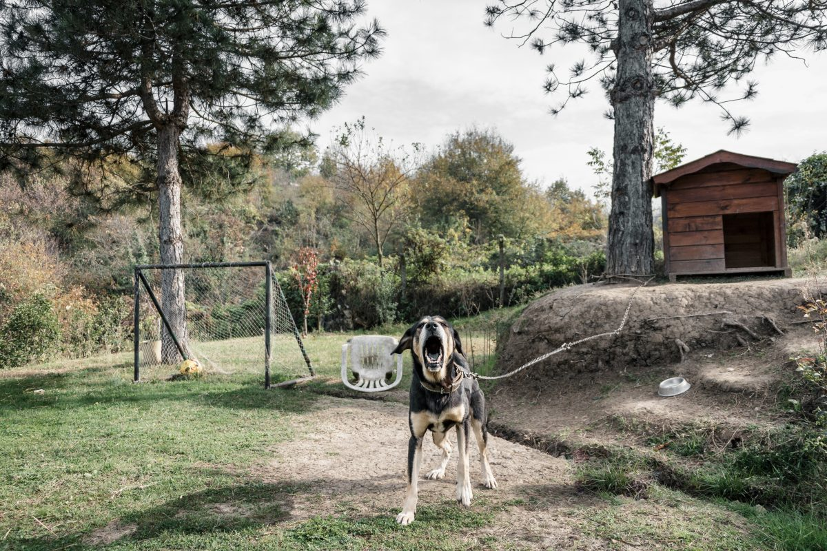 Pes je najbolj učinkovit čuvaj v hiši, ne na verigi