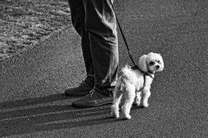 10 zlatih pravil pasjega bontona