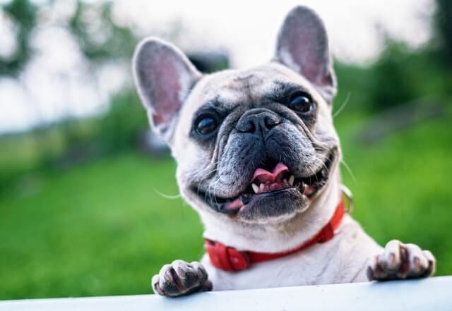 Spremembe v vzreji rodovniških psov in izdaji rodovnikov