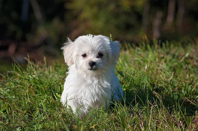 Tudi majhni psi potrebujejo vzgojo in šolo