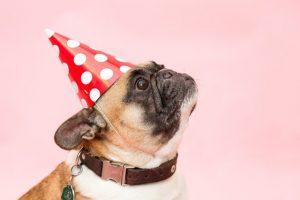 Eno pasje ni sedem človeških let