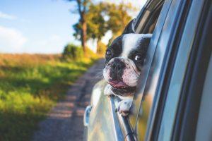 Pes v avtu – 7 pravil