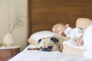 Pozor, pes v postelji