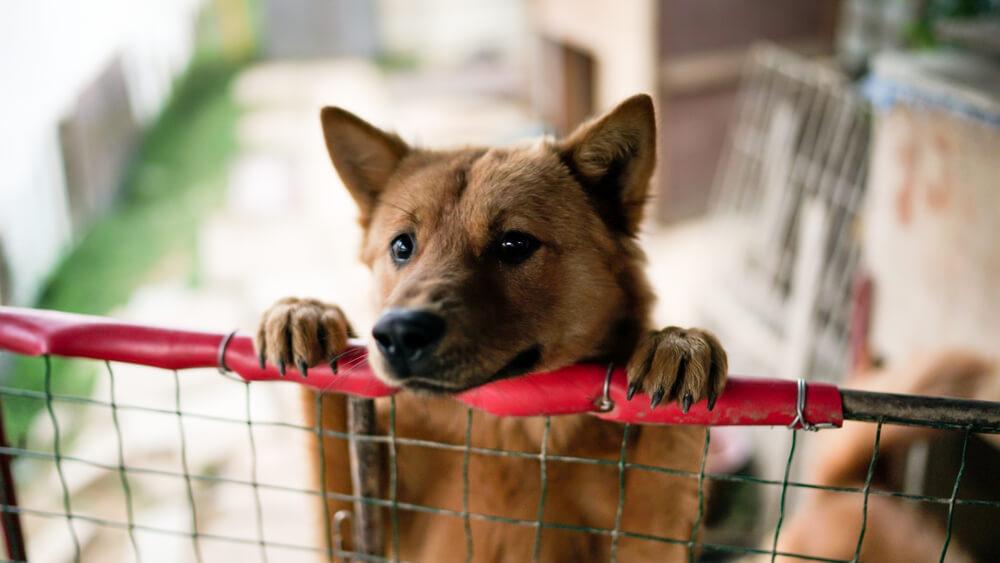V Lidlovih trgovinah zbirajo hrano za brezdomne živali