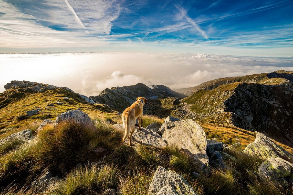 S psom v hribe – kdaj in kako?