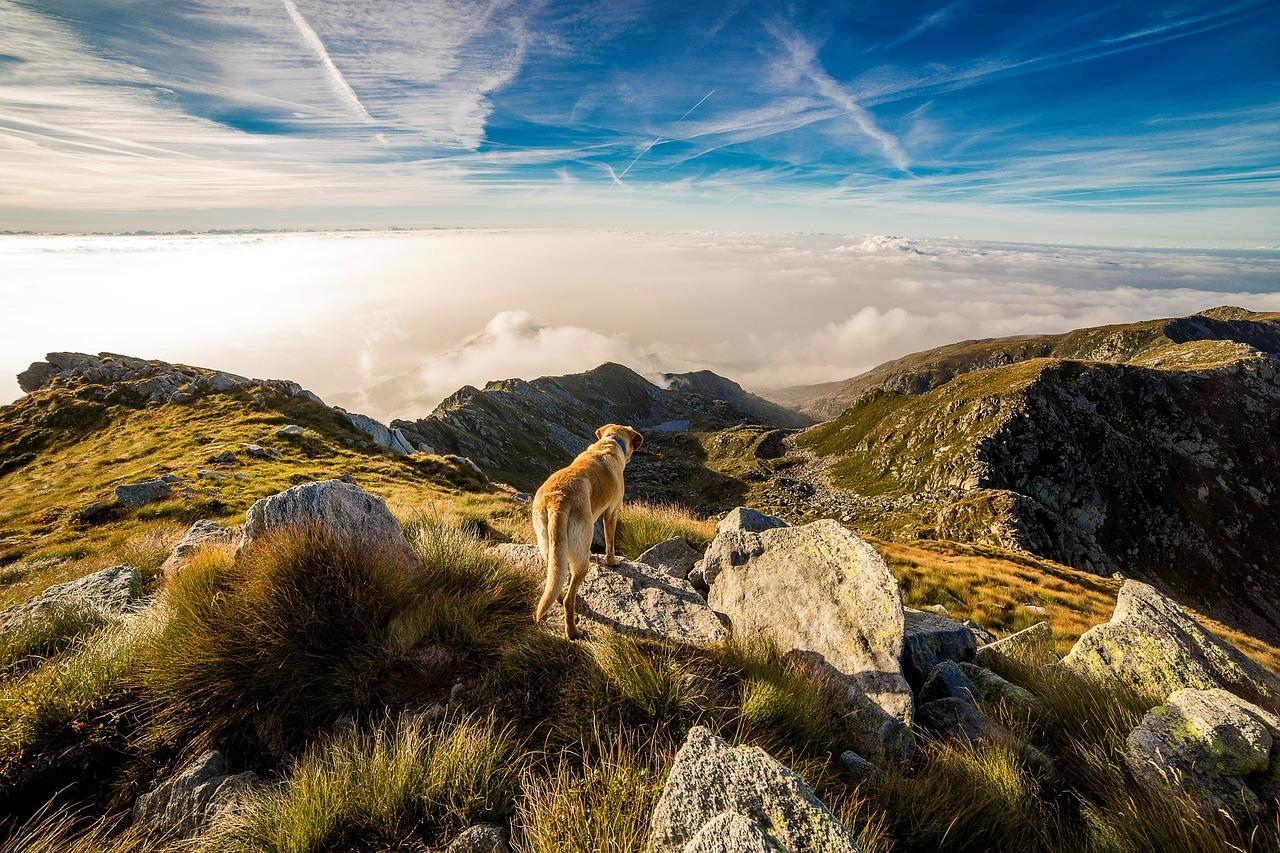 S psom v hribe - kdaj in kako?