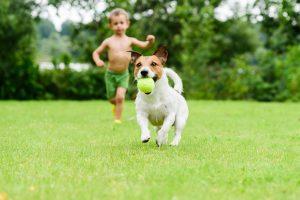 Pes si ustvarja odnos do otroka na podlagi izkušenj