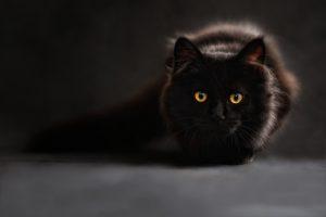 Skrivnost črne mačke