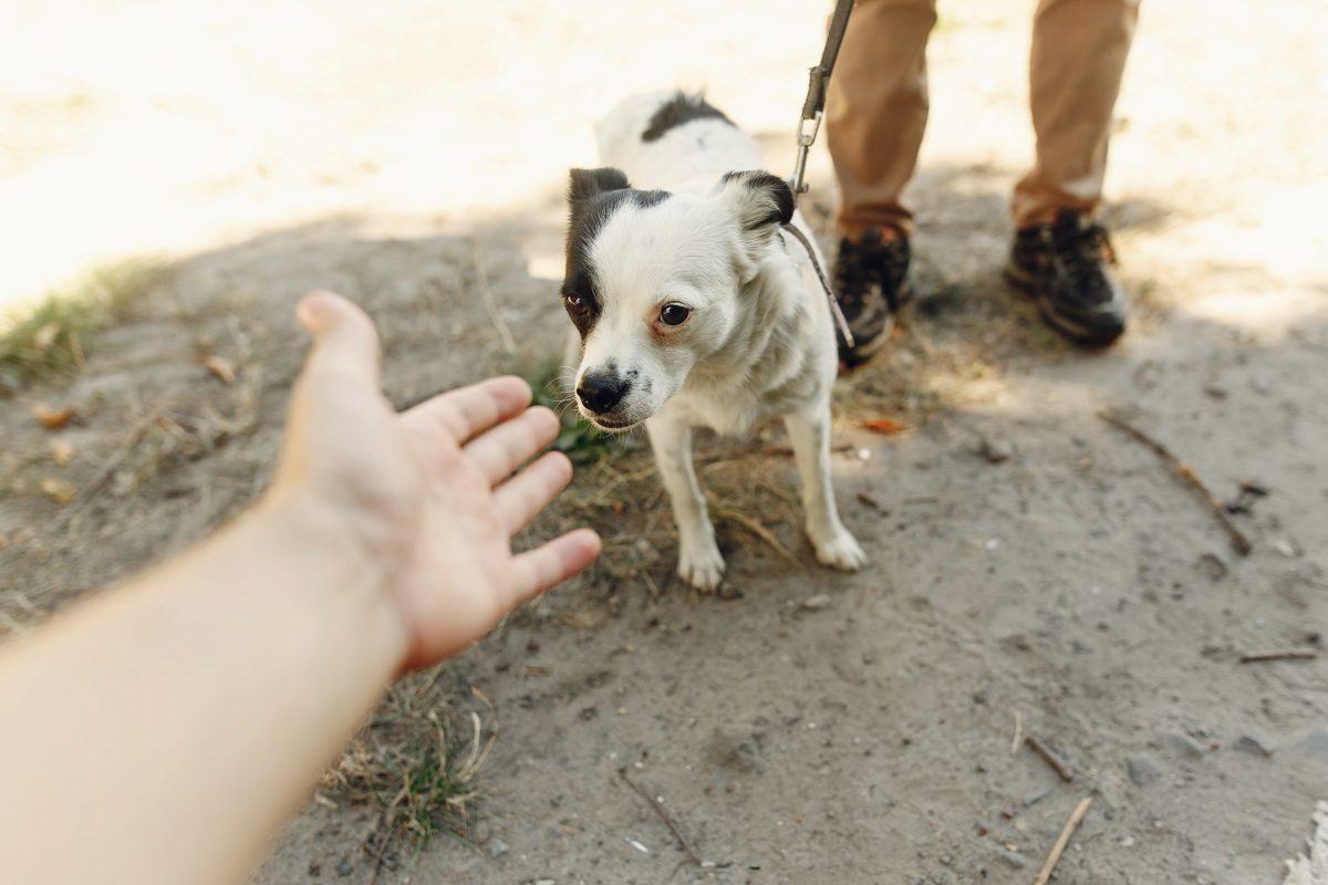 Vid ima pomembno vlogo pri komunikaciji med psi