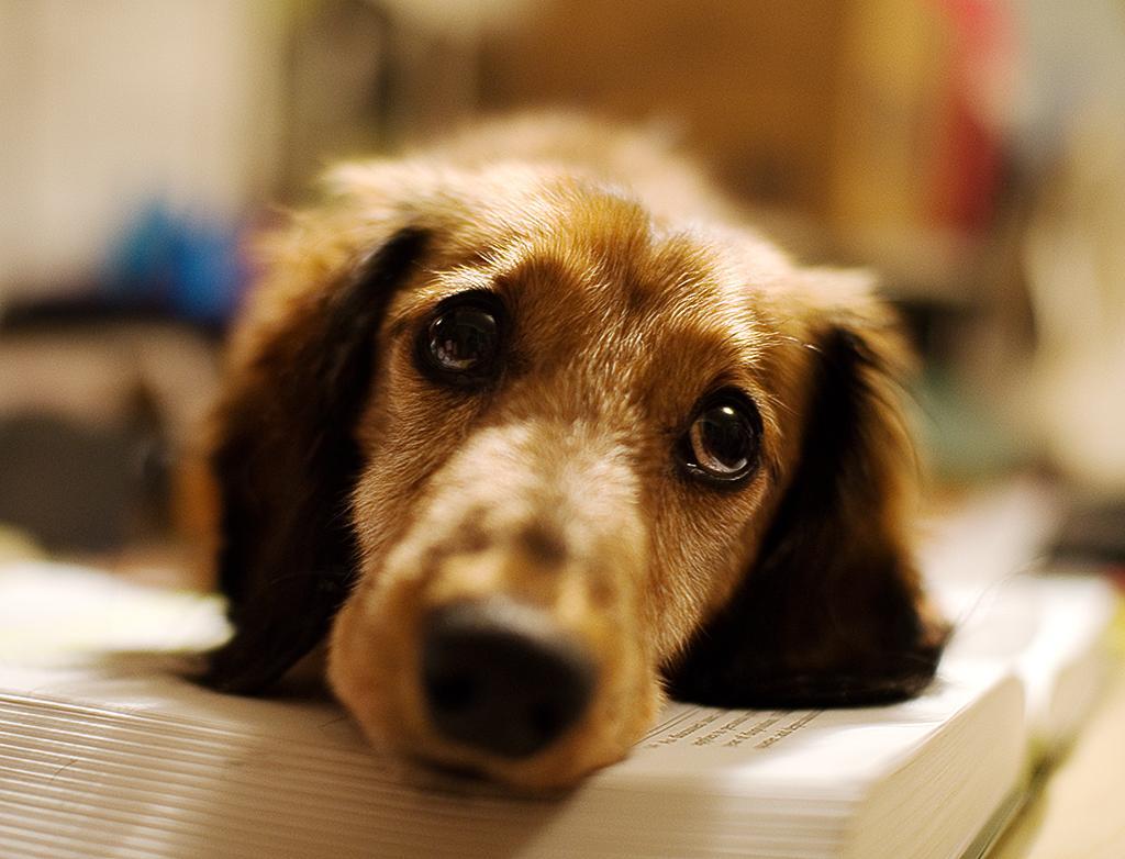 Psi delajo posebne ''face'' takrat, ko jih gledamo