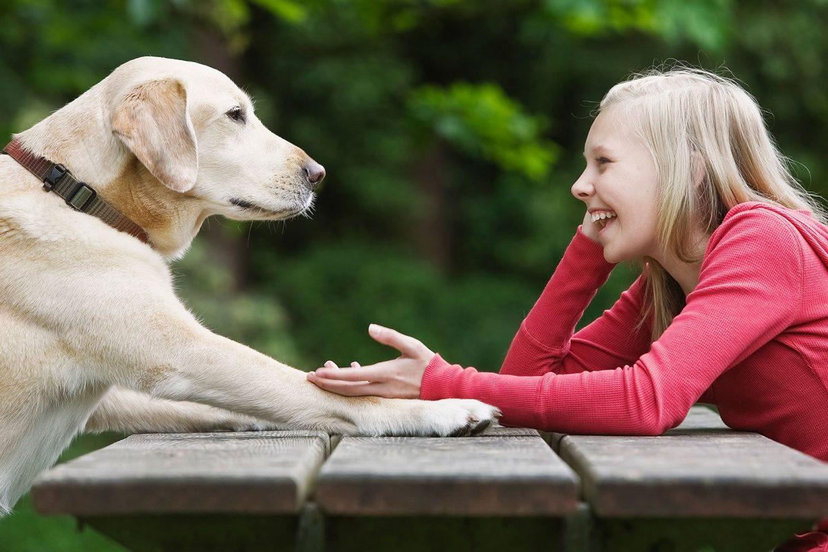 3 stvari, ki gredo psom na živce