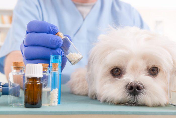 Homeopatija pri psih