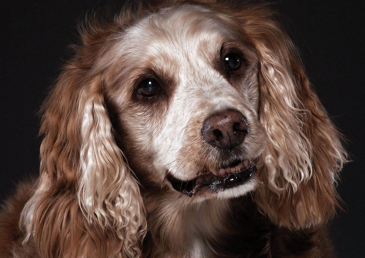 Stari psi nosijo v sebi mir