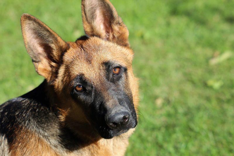 7 policijskih psov išče nov dom