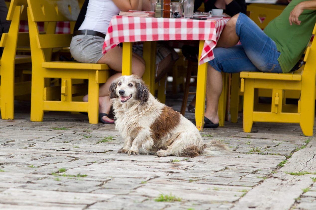 S psom v gostilni: 5 pravil