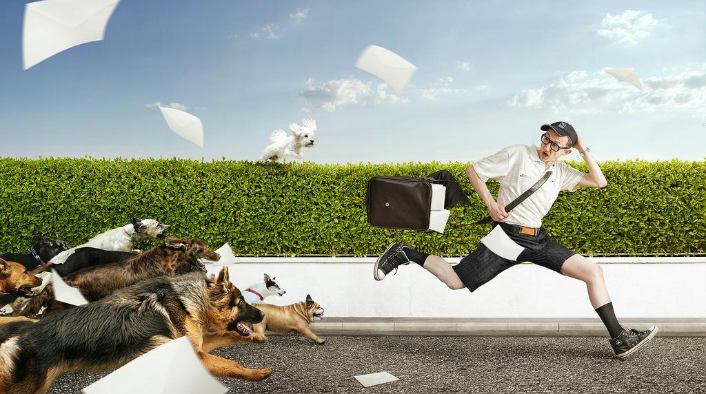 Zakaj psi sovražijo poštarje?
