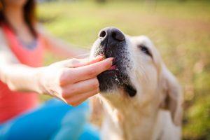 Pasji trikci – 7 pravil za lažje učenje