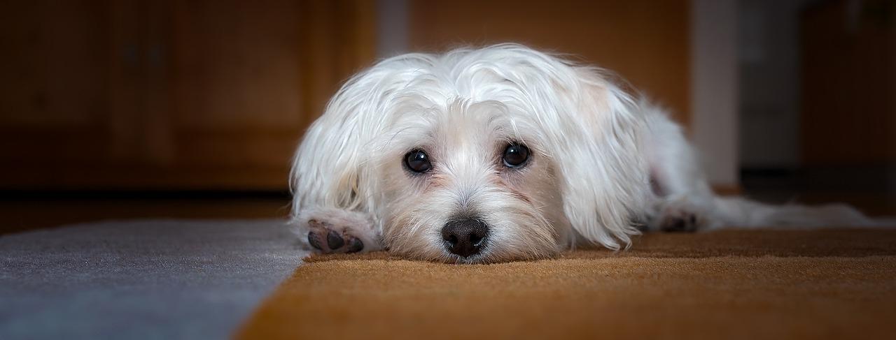 Zakaj so psi tako radi v svojem ''brlogu''?