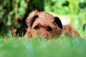 Zakaj tekanje po domačem vrtu za psa ni dovolj?