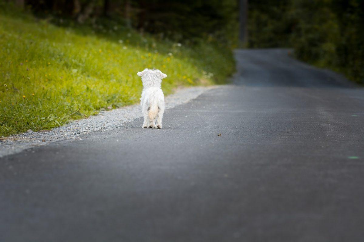 5 nasvetov za večjo varnost psa
