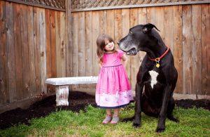 Česa vse nas pes lahko nauči?