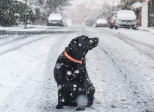 Antifriz je za psa lahko smrtno nevaren