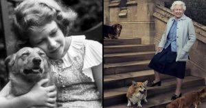 Na britanskem dvoru po 80 letih ni več 'corgijev'