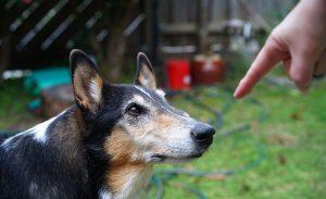 5 dejstev o psih, ki jih morda še ne veste (2. del)