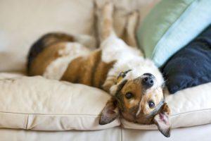 5 uporabnih gospodinjskih trikcev – za pasje skrbnike