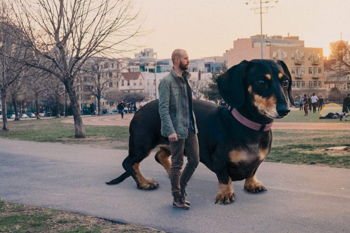 Moški prilagodil svojega psa na velikost, kakršno misli da ima