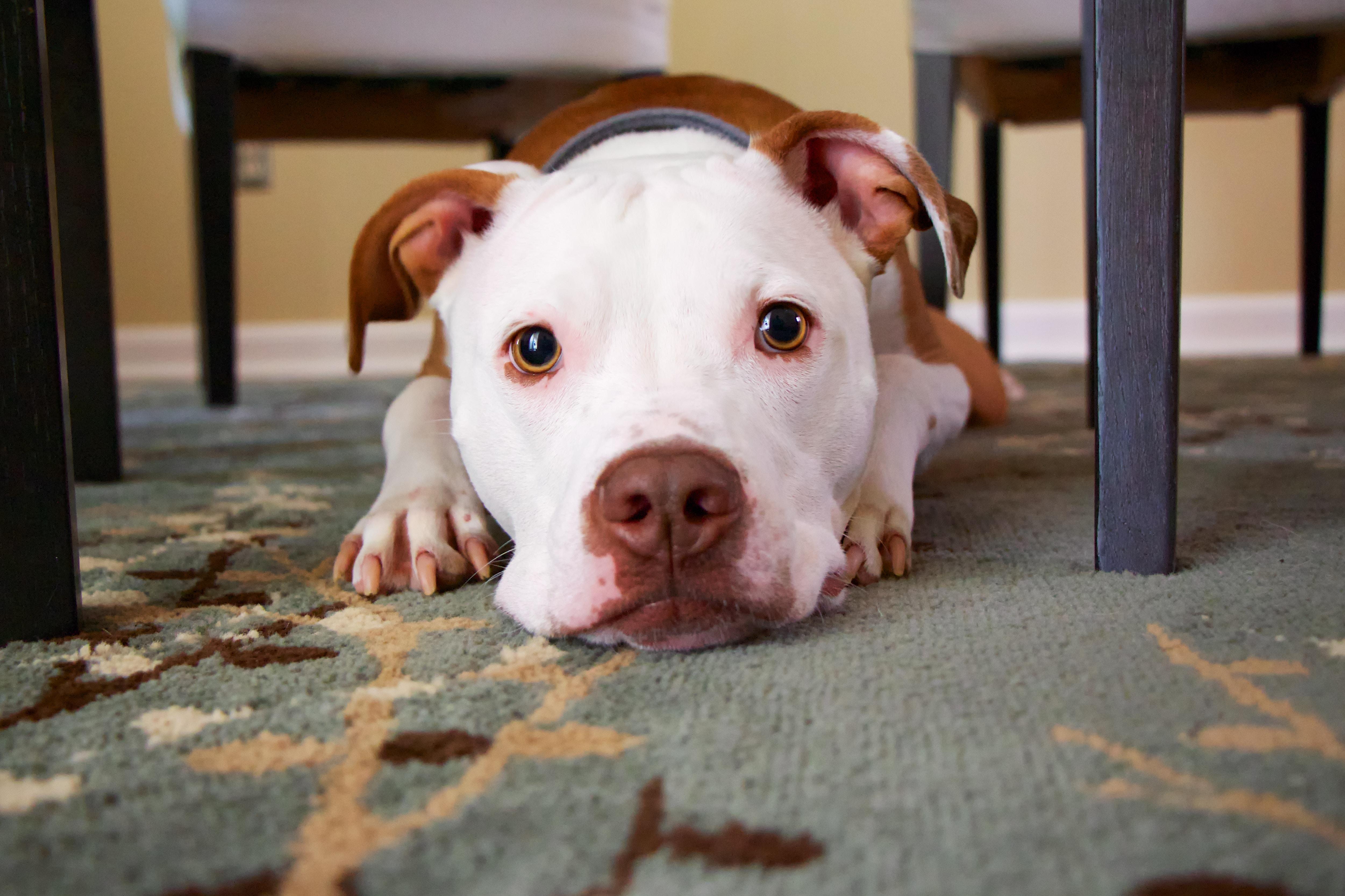Je psa res treba (pre)utruditi, da bo poslušen?