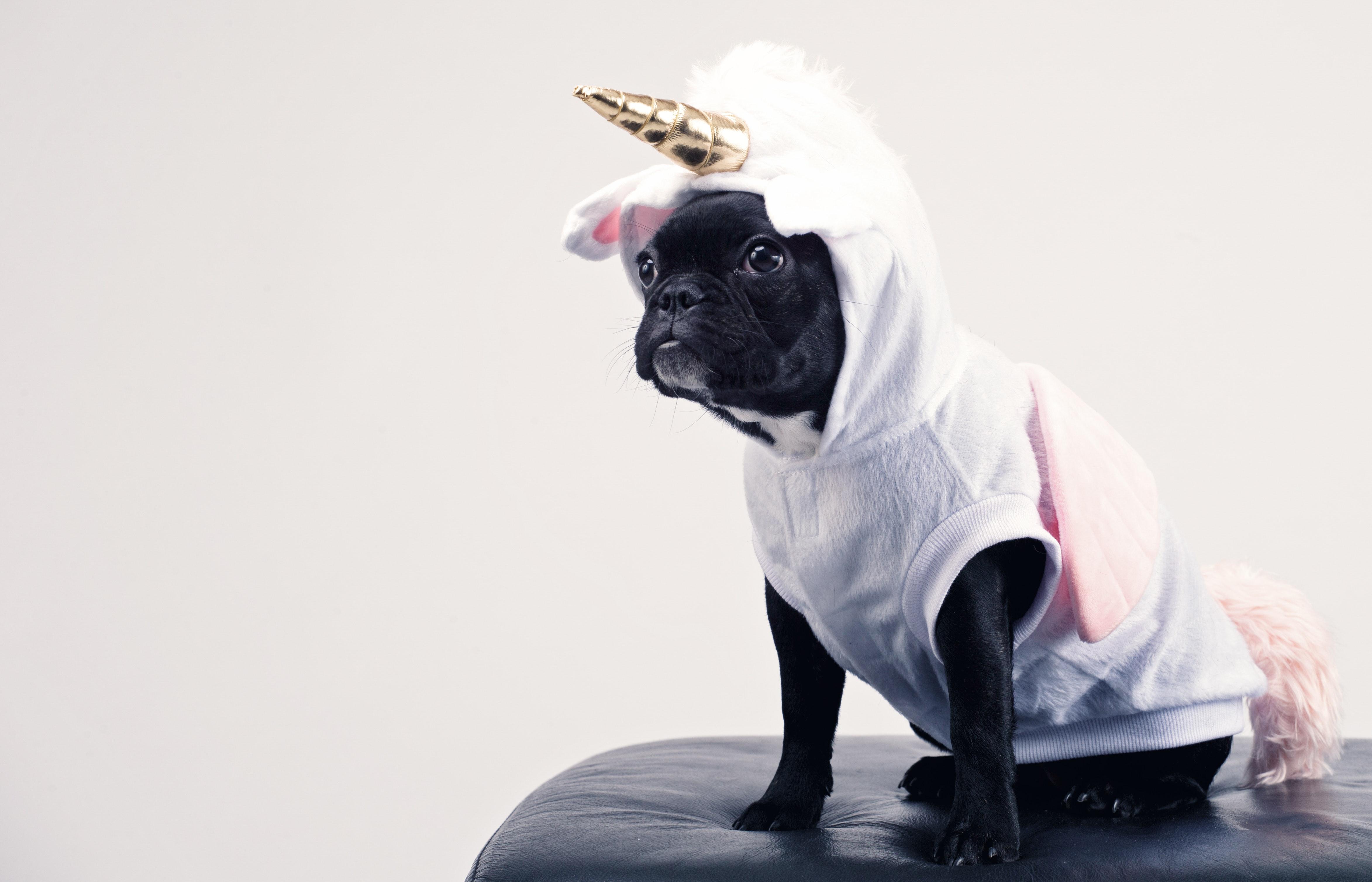 Počlovečenje je za psa ponižujoče, neprijazno in nepošteno