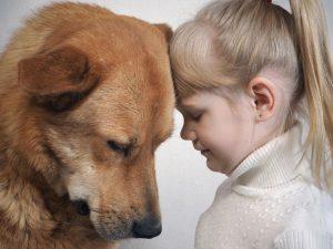 Psi dobro vedo, kdaj smo žalostni