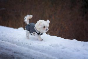 Ko pritisne mraz …