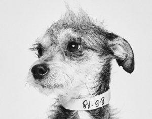 Zapuščeni psi postali glavne zvezde na očarljivih portretih