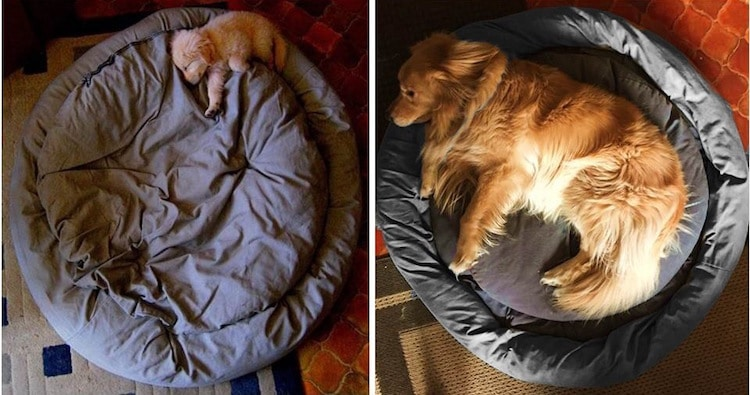 10 fotografij mladičkov – in kakšni so danes