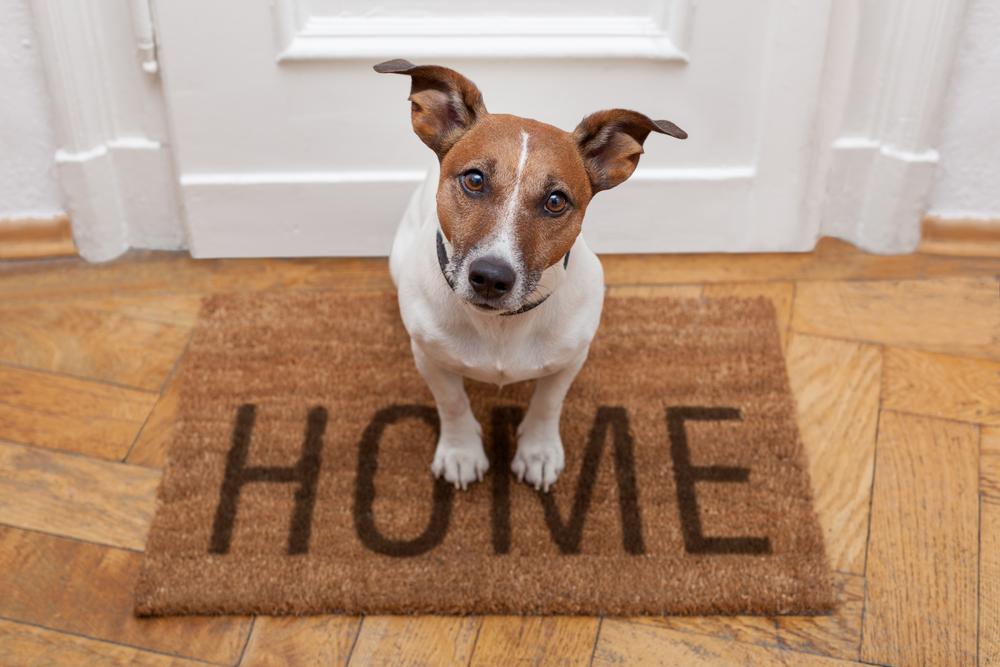 Kako naučiti psa, da bo znal biti sam