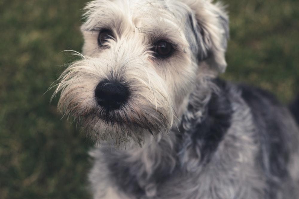 5 dejstev o psih, ki jih morda še ne veste (1. del)