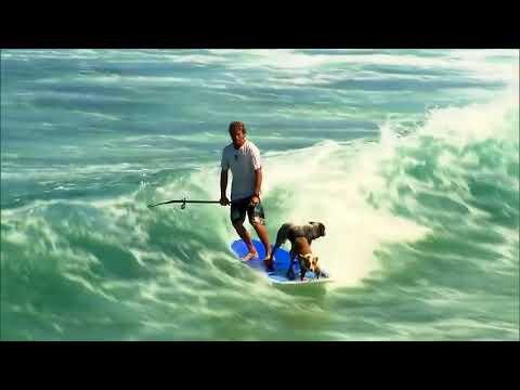 Pasja surferja