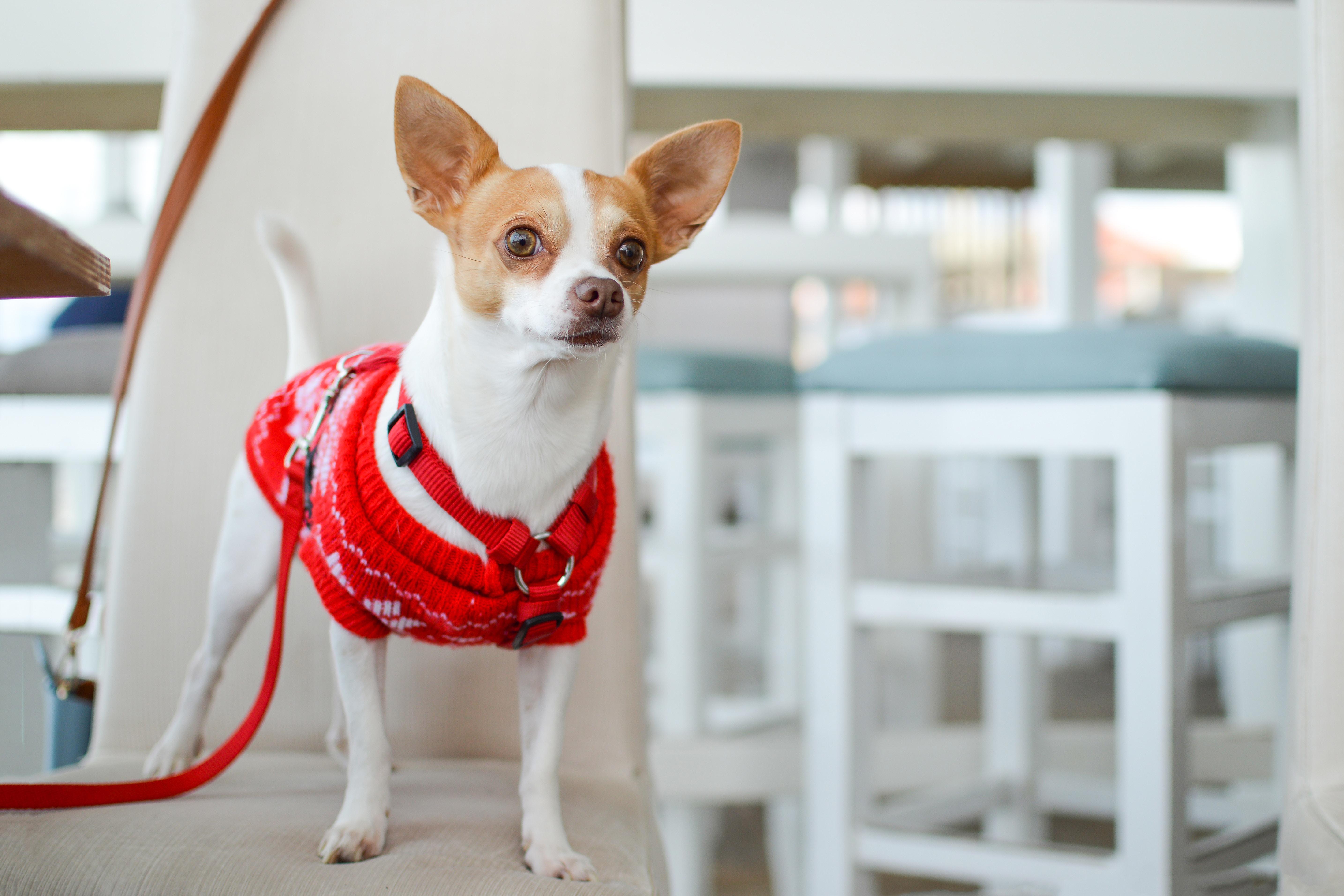 TEST: Ali vas pes nadzira, in kako ukrepati