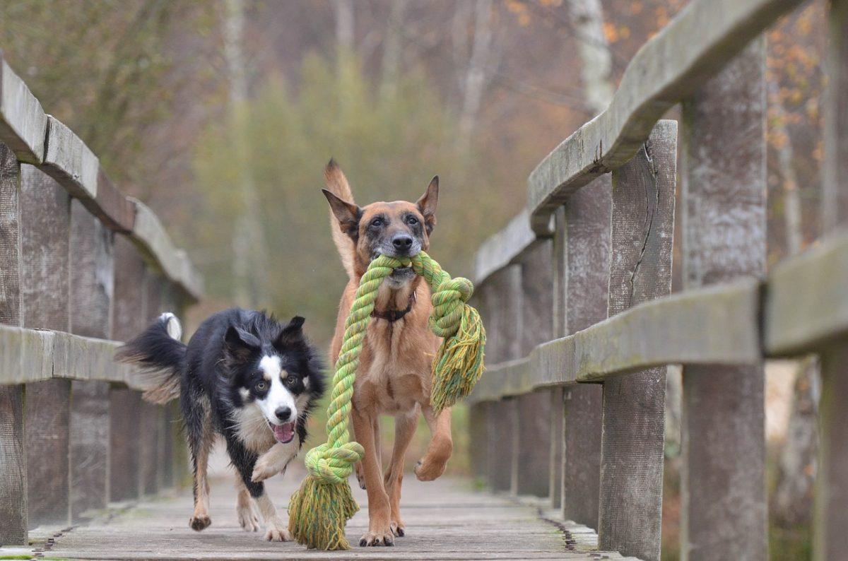 5 zmot o vzgoji psov (2. del)