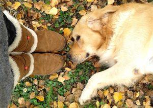 5 zmot o vzgoji psov