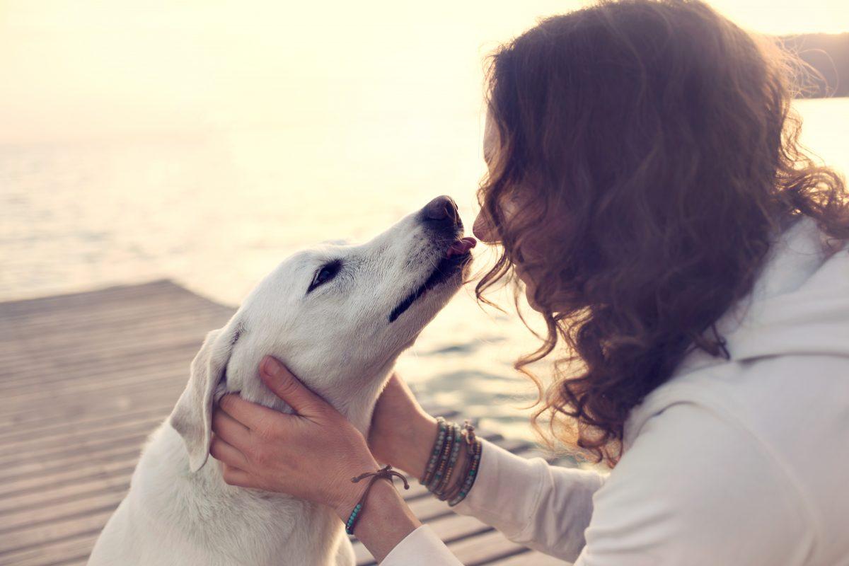 5 zanimivih dejstev o pasjem poljubu