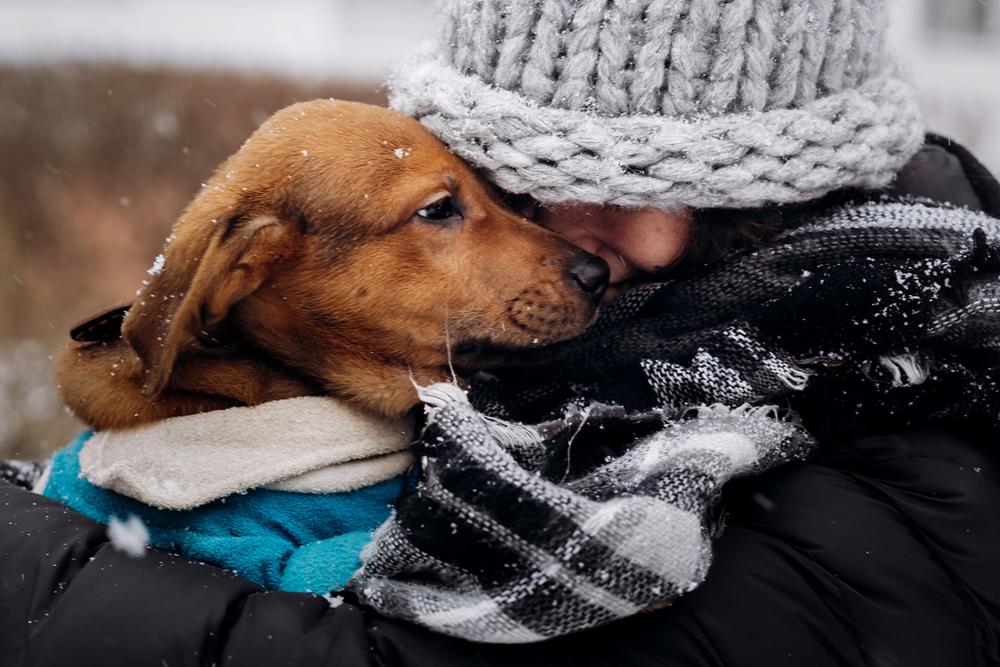 Kako zaščititi psa pred pokanjem