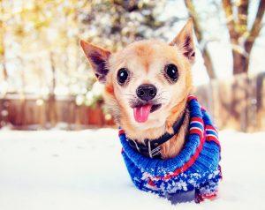 Katere pse najbolj zebe?